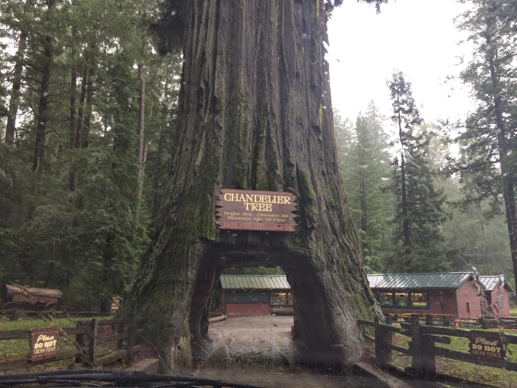 San Francisco to Portland Road Trip: Day 2 (Sonoma to the Redwoods ...